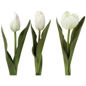 Tulips Mix White