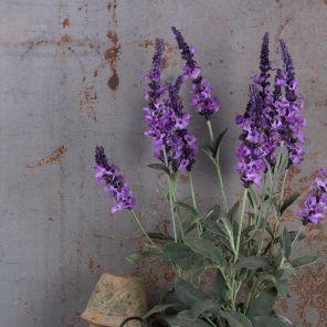 Faux Purple Veronica Potted Plant