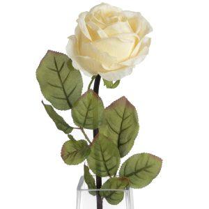 Cream Single Rose Stem