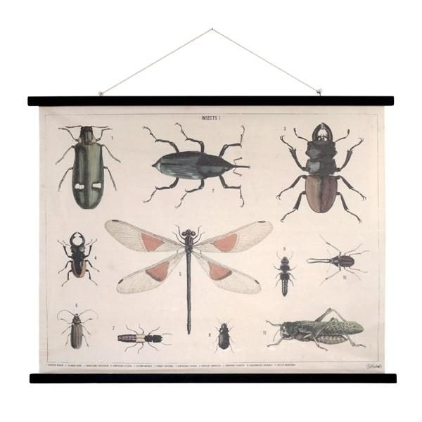 Insect Print  School Chart