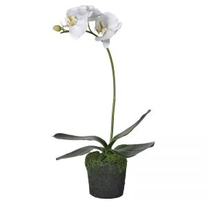 Faux White Orchid in Soil & Moss