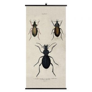 Beetles Biological Wall Chart
