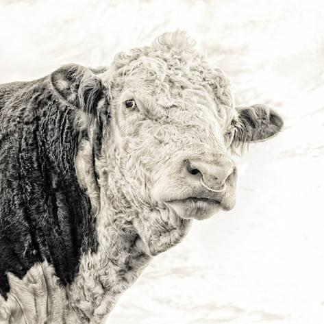 Glass Framed 'Hereford' Signed Photographic Print