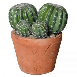 Barrel Cactus in Terracotta Garden Pot
