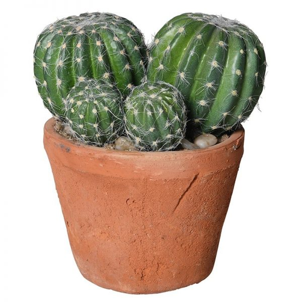 Barrel Cactus in Terracotta Garden Pot