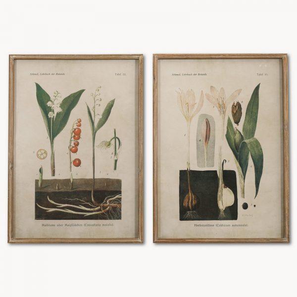 Brookby Set of 2 Framed Botanical Wall Art