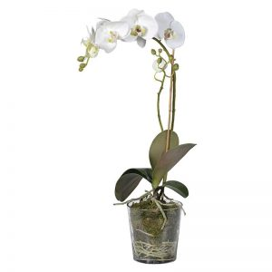 Faux Orchid in Glass Planter with Moss