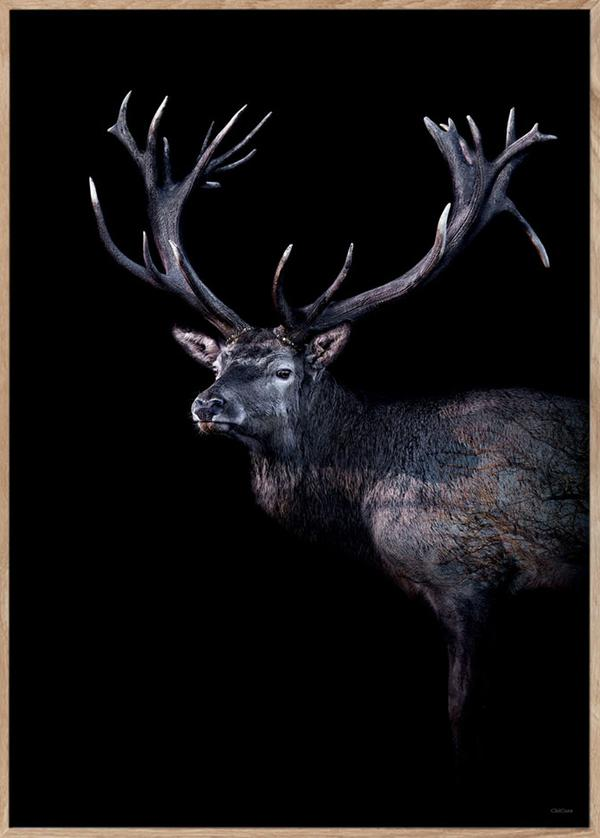 Dear Red Deer 70x100cm Print in Black Frame