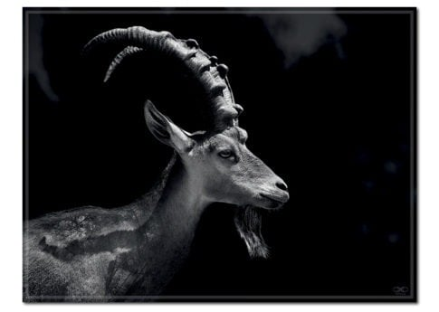 Mr Ibex Photo Art
