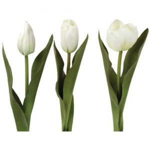 Tulips Mix White