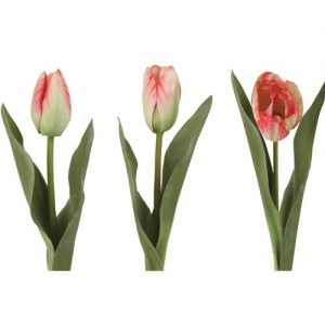 Tulip Mix Multi Pink