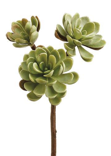 Tall Faux Echeveria Succulent