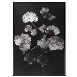 Vintage Floral Print in Black Frame