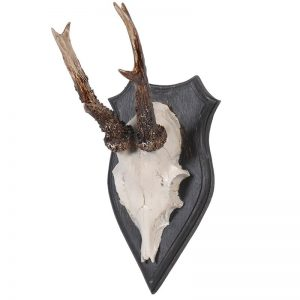 Faux Skull and Antler Wall Mount