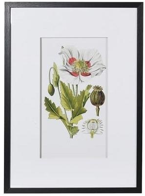 Framed Garden Floral Illustration No 1 print