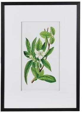 Framed Garden Floral Illustration No 2 print