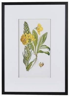 Framed Garden Floral Illustration No 3 print