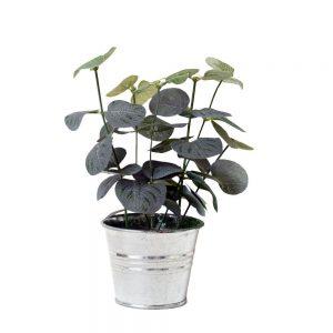 Eucalyptus Mini Bucket