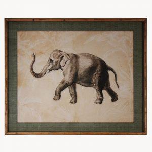 Framed Elephant Print
