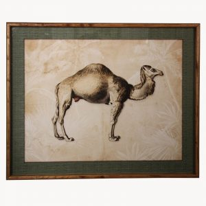 Framed Camel Print
