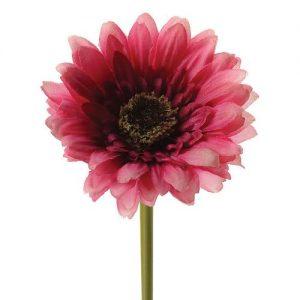 Gerber Dark Pink