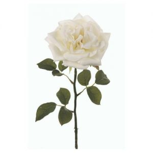 White Cabbage Rose