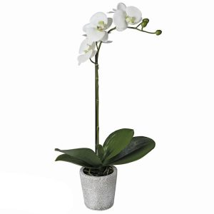 Single White Orchid in Grey Pot
