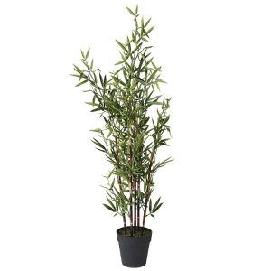 Bamboo Tree in Black Pot