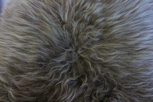 Icelandic Sheepskin Caramel Tip