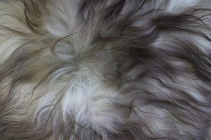 Icelandic Sheepskin Natural White Dark Top