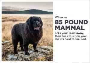 Greetings Card - 85 Pound Mammal