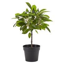 Faux Anubias Plant in Pot
