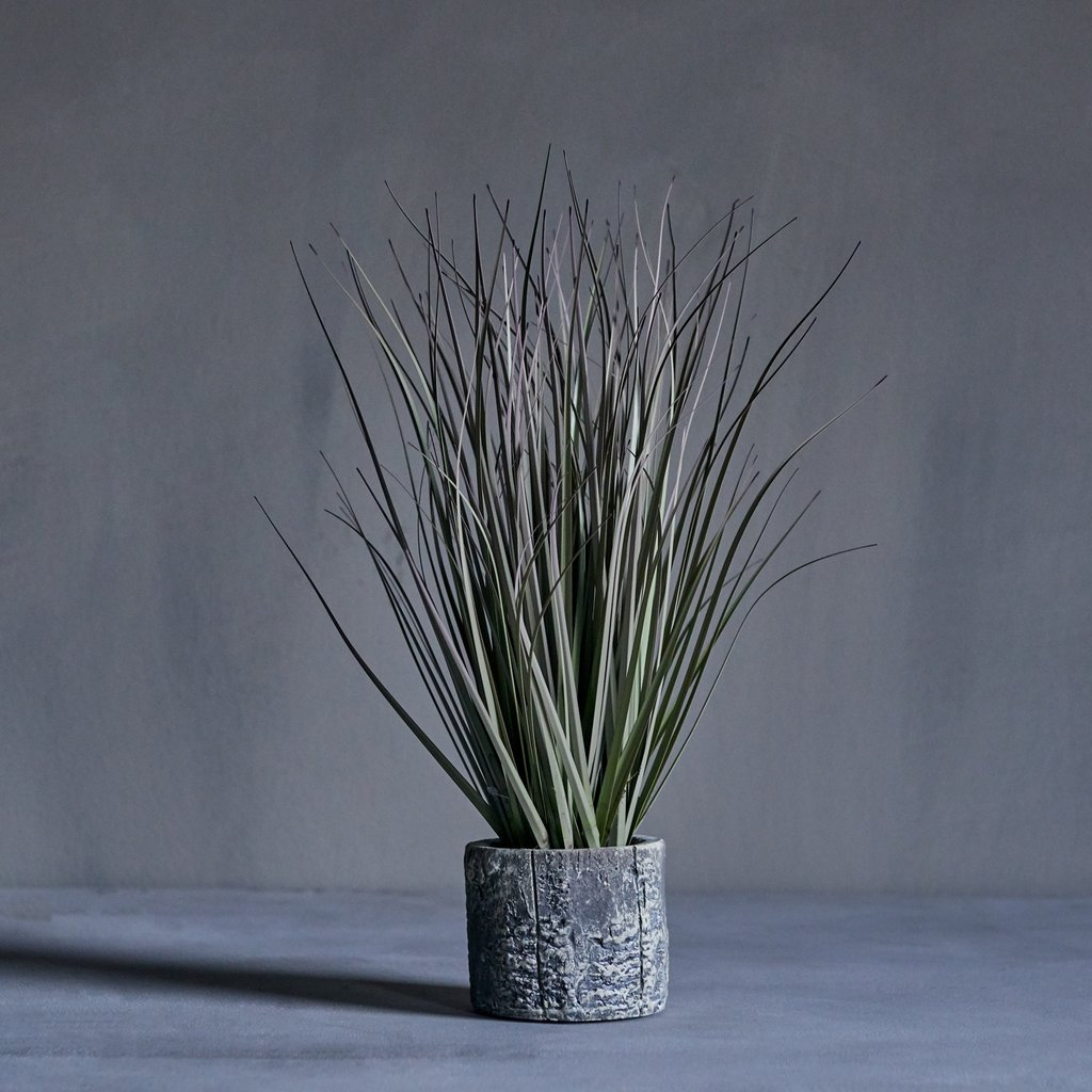 Lake Sedge Grass Plant