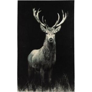 Stag Canvas On Dark Background Extra Large